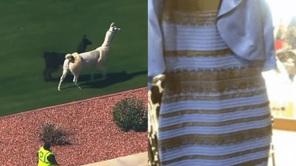 It's Been SIX YEARS Since Two Llamas And 'The Dress' Resulted In The Best Day In Internet History
