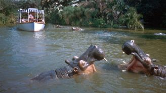 Boat On Jungle Cruise Ride Sinks At Disney World, Here Is A Video With 'Titanic' Music