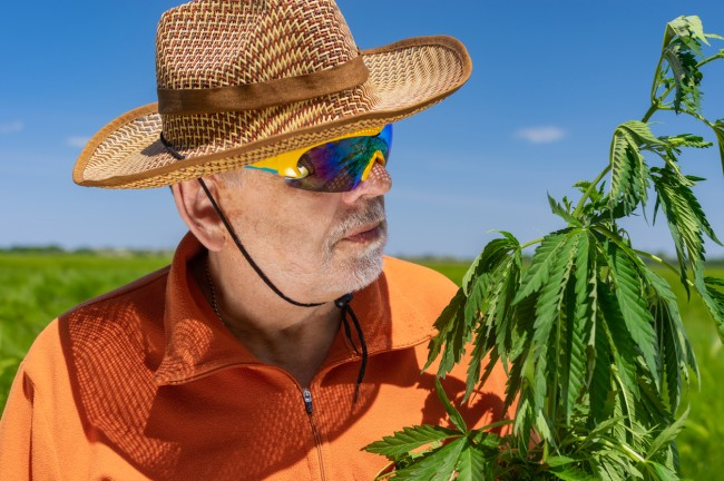 The numbers of American senior citizens over age 65 who now smoke marijuana or use edibles increased two-fold between 2015 and 2018, according to research published Monday in JAMA.