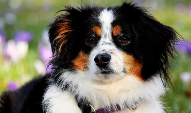 PETA Says Pet Is Derogatory Wants Everyone To Call Them Companions