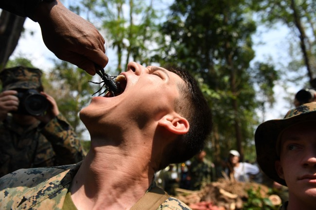 Cobra Gold training exercise Thailand US troops snakes blood