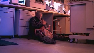 The Dog Scene From 'I Am Legend' Is The Saddest Movie Scene I've Ever Watched