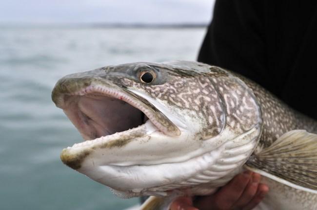37-pound lake trout new hampshire state record