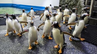 These Videos Of Penguins Roaming Around A Closed Aquarium Are Exactly What The World Needs Right Now
