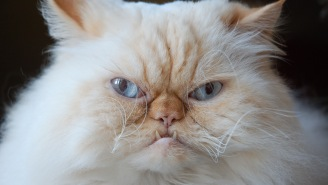 Two Cats Are The First American Pets To Contract Coronavirus