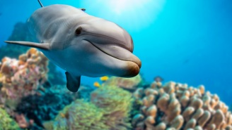 Dolphins Are So Bored With People Staying Locked Up Inside They're Bringing Us Gifts So People Go Swimming Again