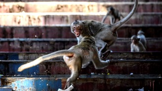 Thousands Of Aggressive Sex-Crazed Monkeys Form Rival Gangs, Take Over Buildings, Force Humans To Take Cover