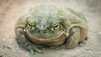 Adult Film Star Nacho Vidal Arrested After A Man Died Inhaling Psychedelic Toad Venom During A Mystic Ritual