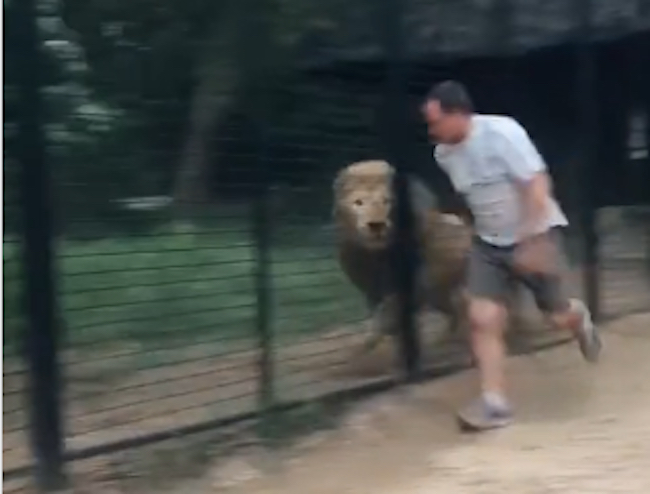 man juking lion