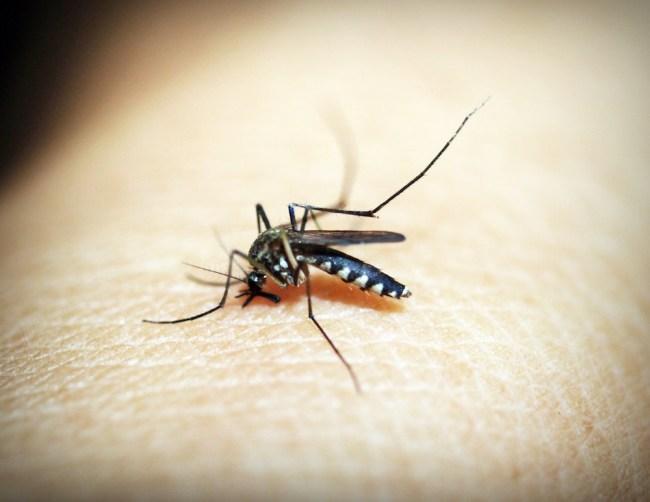 mosquito bite EEE virus