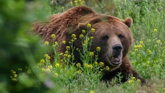 National Park Service Says Pushing Your Slow Friend Down As Bait Is Not A Recommended Way To Survive A Bear Attack