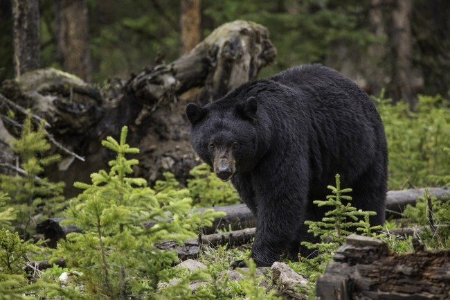 Canadian Hiker Shares What It Was Like To Be Blindsided By A Bear That Bashed Her In The Face With Its Paws