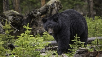 A California Man Tackled And Punched A 350-Pound Bear In The Face To Save His Dog From An Attack