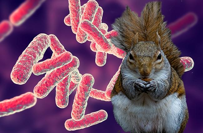 colorado squirrel bubonic plague