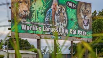 Filming At 'Tiger King' Zoo Shut Down After Crew Believes They've Found Human Remains