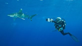 A Woman Working On A Documentary About Sharks Was Attacked By One…During Her Day Off From Filming