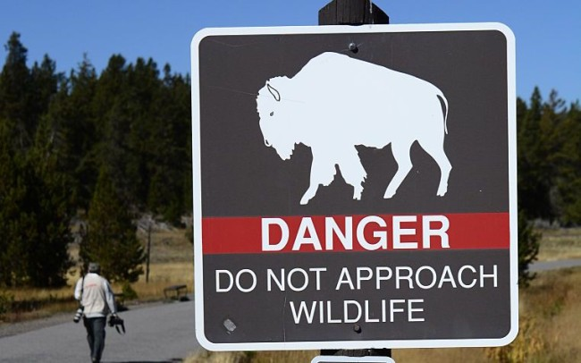 yellowstone animal social distancing guide