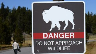 Yellowstone Debuts A Handy Social Distancing Graphic To Help Visitors Avoid Getting Mauled And Gored By Wild Animals