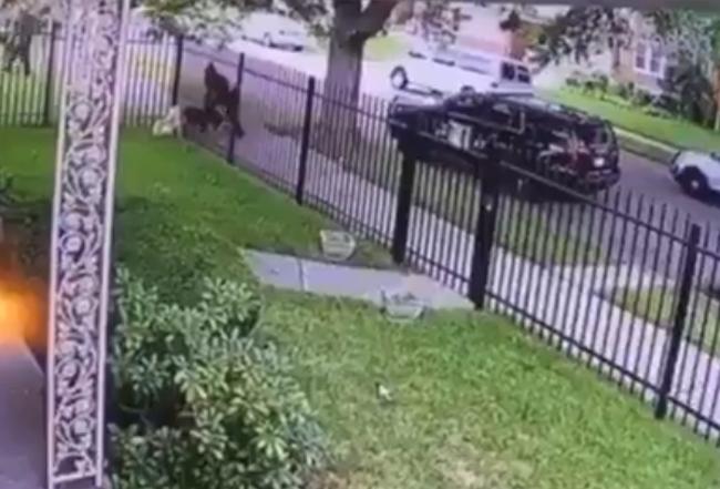 Detroit Police Shoot Dog