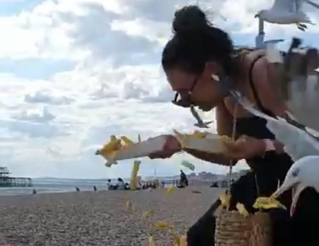 Seagulls Stealing Fries