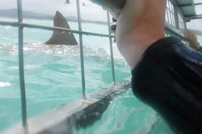 Are Sharks More Attracted To Human Or Fish Blood? YouTuber Uses A Bucket Of Blood To Find Out