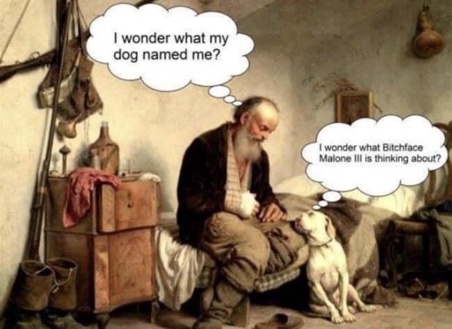 50 best memes dog names