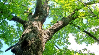 Man Spends More Than 100 Hours Trapped Under A Giant Tree, Survives On 'Insects And Rainwater'
