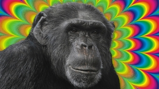Descendants Of Monkeys Released By Ken Kesey After Being Used To Test LSD Tests May Still Roam A California Town