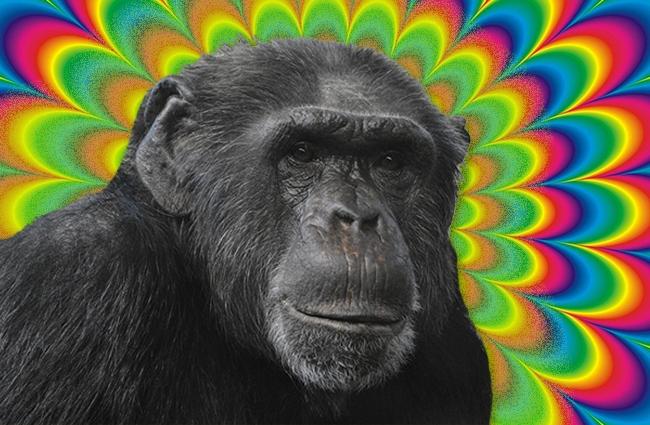 ken kesey lsd monkeys california town