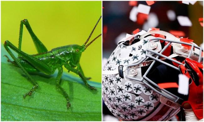 shaun wade green cricket ohio state