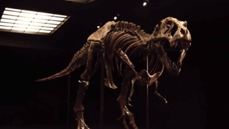 Now's Your Chance To Buy One Of The Two Most Complete T. Rex Skeletons Ever Found