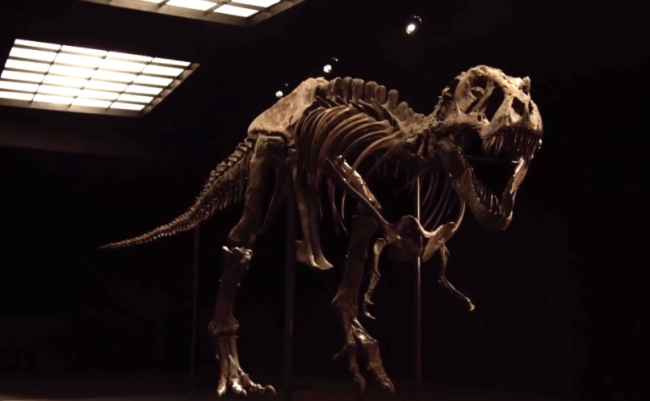 One of world's two largest and most complete Tyrannosaurus rex (TRex) skeletons is going on sale at an upcoming Christie's of New York auction.