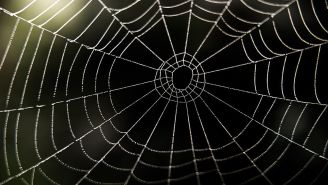 This Giant Spider Web Looks Big Enough To 'Catch A Human' – 2020 Continues To Hate Us