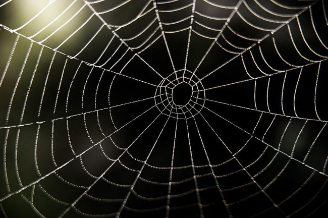 """Arachnids spinning spider webs large enough to """"catch"""" humans in a Missouri forest."""