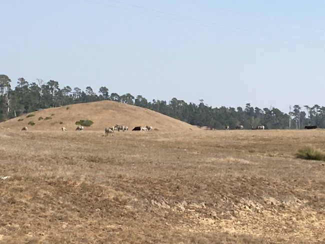 wild zebras San Simeon, California Hearst Castle