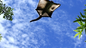 We Must Find The Fugitive Member Of This Flying Squirrel Trafficking Ring
