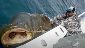 320-Pound Jaguars Offensive Lineman Jawaan Taylor Battles A Gargantuan 400-Pound Goliath Grouper
