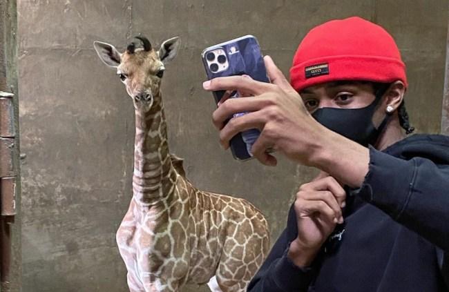 ja morant giraffe memphis zoo