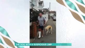 Man Spends $400 Only To Discover His Limping Dog Was Just Imitating Him Out Of Empathy