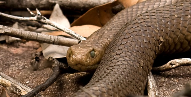 Scientists Discover Snakes Turn Their Bodies Into 'Lassos' To Climb And The Video Is Pure Nightmare Fuel