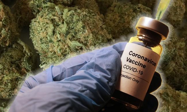 covid vaccine free marijuana washington dc