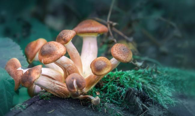 man injects magic mushrooms organ failure