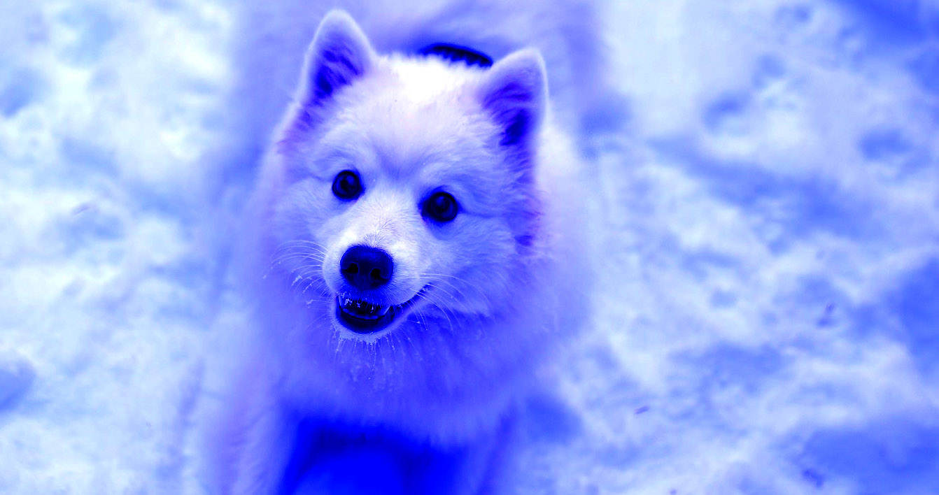 Mysterious neon blue dogs appear in Russia, freaking everyone out