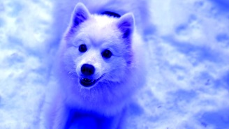 Mysterious Bright Blue Dogs Have Suddenly Appeared, Roaming The Streets In Russia
