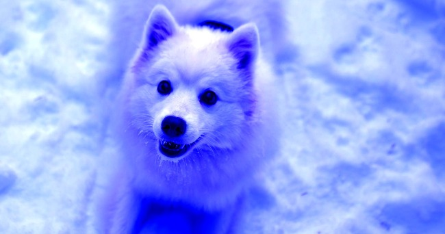 Bright Blue Dogs Have Suddenly Appeared Roaming The Streets In Russia