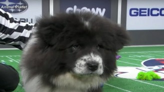 Pup Named Chunky Monkey Who Fell Asleep During The Puppy Bowl Is The Internet's New Hero