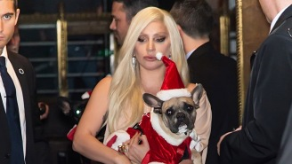 Lady Gaga's Dog Walker Shot Four Times In The Chest, Gunmen Take Off With Two Of Her Dogs