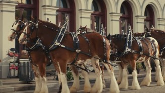 Sam Adams Takes A Clever Shot At Budweiser With Clydesdale Super Bowl Commercial