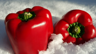 USDA Says It's Not Safe To Store Food In The Snow If You Lose Electricity