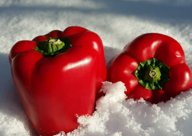 not safe to store food in snow